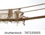 lima  peru july 2 2015 peruvian ... | Shutterstock . vector #787235005
