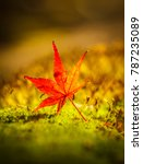red maple leaves fall on the... | Shutterstock . vector #787235089