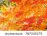 maple color change in winter in ... | Shutterstock . vector #787235275
