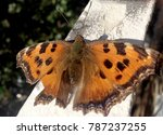 photo shows beautiful tropical... | Shutterstock . vector #787237255