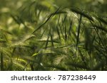 a field of wheat and grass.