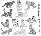 hand drawn sketch style.cats... | Shutterstock .eps vector #787297351