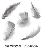 Five Different Feathers...