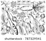 root and tuberous vegetables ... | Shutterstock .eps vector #787329541