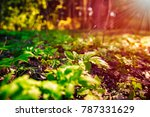 Spring background. Green plants on ground in forest and rays of sunlight through the trees