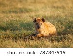 Small photo of A spotted or laughing hyena resting in Africa's Ngorongoro Conservation Area.