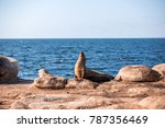 Sea Lions And Pacific Ocean