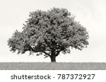 a solitary tree in a grassfield   Shutterstock . vector #787372927