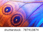 Wing Of A Butterfly Morpho...