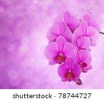 Pink Orchid On Defocused...