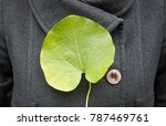 A Large Leaf Of An Aristolochia ...