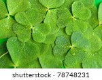 A Texture From Clover Leaves