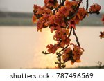 branch of blossoming bombax... | Shutterstock . vector #787496569