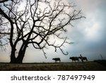 vietnam countryside landscape... | Shutterstock . vector #787497949