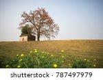 vietnam landscape. blossoming... | Shutterstock . vector #787497979