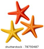 Starfishes. Vector.
