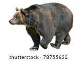 Big Brown Bear Isolated On...