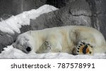 Small photo of Polar white bear sleeping on snow rock. Sleeping polar bear in white winter zoo. Portrait of peaceful sleepy polar white bear (Ursus Maritimus) curled up in snow. Animal hibernate on stone background