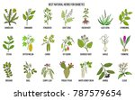 herbs and spices that fight... | Shutterstock .eps vector #787579654