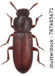 the confused flour beetle... | Shutterstock . vector #787685671