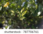 leaf tree green