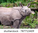 young curious rhino | Shutterstock . vector #787713409