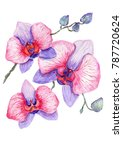 watercolor orchid branch on a... | Shutterstock . vector #787720624