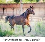 a beautiful stallion is running ... | Shutterstock . vector #787818484