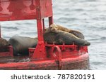 sea lion pup with his family on ... | Shutterstock . vector #787820191