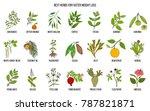 best natural herbs for fast... | Shutterstock .eps vector #787821871