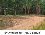 dirt road in pine grove | Shutterstock . vector #787915825