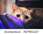 Stock photo ginger cat near the computer keyboard 787981327