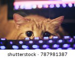 Stock photo ginger cat near the computer keyboard 787981387