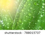 Leaf With Water Drops. Fresh...