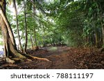 view of a pathway in a tropical ...   Shutterstock . vector #788111197