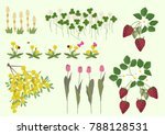 mimosa flowers and spring plant ... | Shutterstock .eps vector #788128531