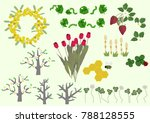 mimosa flowers and spring plant ...   Shutterstock .eps vector #788128555