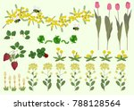 mimosa flowers and spring plant ... | Shutterstock .eps vector #788128564
