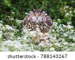 close up of eurasian eagle owl  ...   Shutterstock . vector #788143267