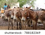 Group Of Donkeys In North...