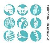 illustrations of human anatomy. ... | Shutterstock . vector #788203861
