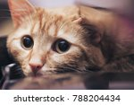 Stock photo ginger cat near the computer keyboard 788204434