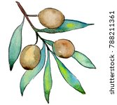 olive tree in a watercolor...   Shutterstock . vector #788211361