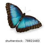Stock photo blue butterfly isolated on white 78821683