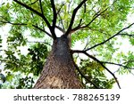 tree view view forest tree | Shutterstock . vector #788265139