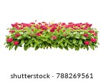 flowers bush tree isolated on... | Shutterstock . vector #788269561