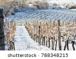 vineyard covered with snow in... | Shutterstock . vector #788348215