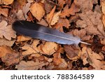 Someone Has Lost A Feather