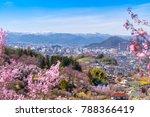 Cherry Blossom Trees  Sakura ...