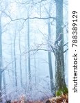 frosted trees in foggy forest... | Shutterstock . vector #788389129